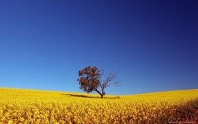 Wallpaper The sky, Field, Tree