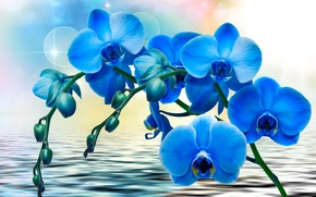 Wallpaper flowers, blue, water, Orchids, background, glare