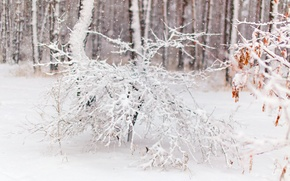 Picture winter, forest, snow, tree in the snow