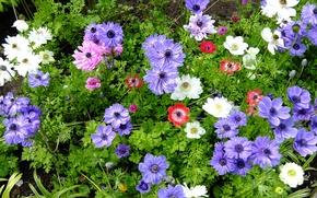 Picture macro, flowers, paint