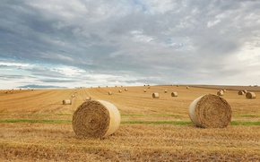 Picture field, summer, hay