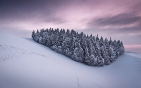 Picture frost, the sky, snow, trees, traces, clouds, tree, Winter, slope, hill, pink, grey