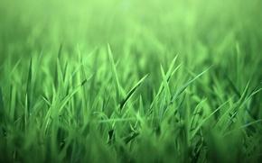 Wallpaper grass, nature, leaves, green