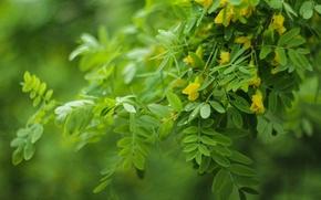Picture greens, flowers, Bush, Helios