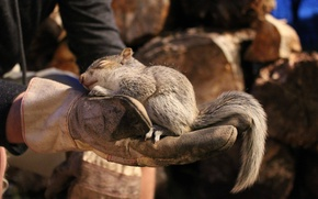 Picture animals, nature, sleep, hands, protein, wood, gloves, support