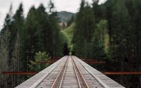 Picture forest, bridge