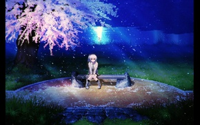 Picture grass, bench, night, river, petals, Sakura, flowering, Tenshi, Kanade Tachibana, Angel Beats, Angel beats
