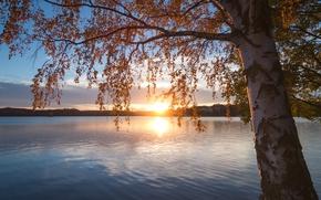 Picture autumn, sunset, branches, lake, tree, birch, Finland, Finland, Lake Saimaa, Southern Savonia, lake Saimaa, South …