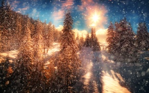 Picture the sun, treatment, snow, Fire and Ice, trees, forest