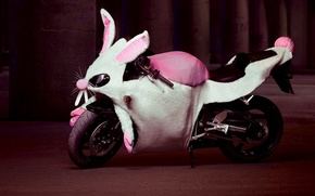 Wallpaper humor, rabbit, motorcycle, Costume