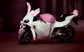 Picture humor, rabbit, motorcycle, Costume