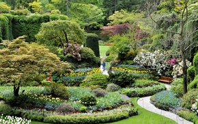 Picture trees, flowers, bench, Park, Canada, track, tulips, the bushes, beds, lawns, Butchart Gardens