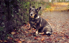 Picture dog, wall, nature, sitting, autumn, leaves