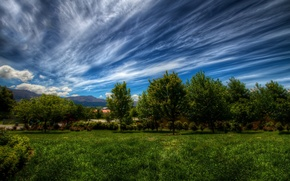 Wallpaper greens, the sky, grass, clouds, trees, landscape, nature, green, plants, grass, sky, landscape, nature, clouds, ...