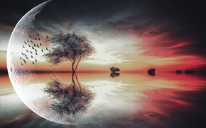 Picture trees, birds, the moon, Fantasy