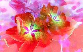 Picture macro, flowers, nature, petals