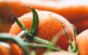 Wallpaper drops, tomato, tomato, vegetable