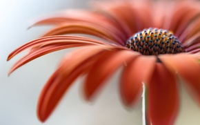 Picture flower, macro, nature