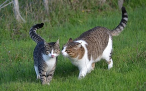 Picture grass, nature, cats, pair