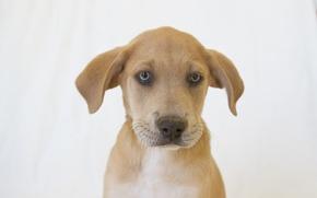 Picture dog, puppy, white background, dog