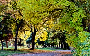 Picture Autumn, Falling leaves, Victory Park, Yellow leaves