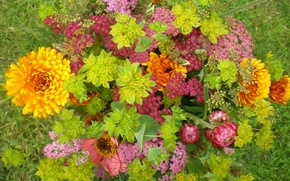 Picture grass, nature, Wallpaper, bouquet, petals, meadow