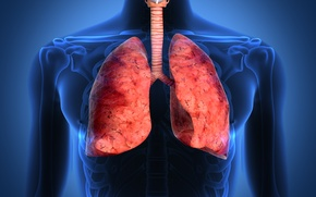 Picture lungs, respiratory tract, human body