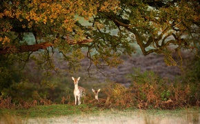 Picture forest, nature, deer, red, forest, fawn, nature, animal, deer, wild, Emi