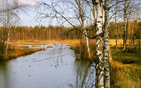 Picture ice, autumn, forest, the sky, trees, river, stream, birch, freezing