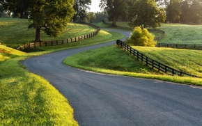 Picture road, greens, grass, trees, the fence, areas