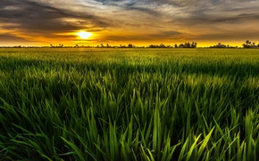 Picture greens, field, the sky, the sun, clouds, landscape, nature, green, background, Wallpaper, wallpaper, widescreen, background, …