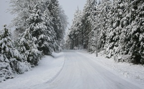 Picture road, trees, Snow, winter
