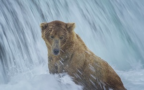 Picture waterfall, bear, Alaska, bathing, Alaska, Katmai National Park, The Katmai national Park, Brooks Falls