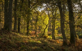 Picture forest, grass, trees, Scotland, Pitlochry