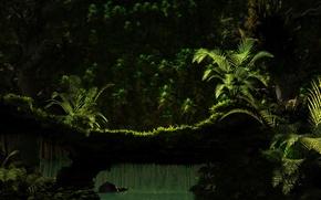 Wallpaper tree, water, greens, fern, nature
