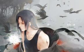 Picture flower, Lotus, crows, naruto, art, Itachi Uchiha