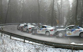 Picture Audi, Road, Forest, Turn, Quattro, Rally, Rally