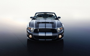 Picture Ford, Shelby, 2010, GT 500