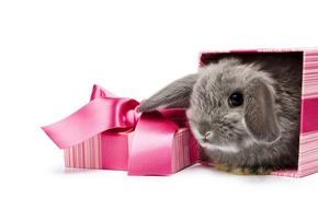 Wallpaper box, rabbit, white, gift, background