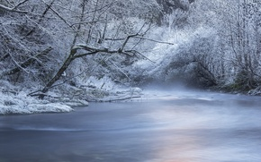 Picture winter, forest, snow, trees, river