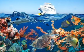 Wallpaper yacht, fish, sea, water, corals, underwater world, the sky, turtle