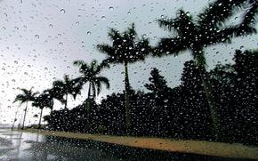 Wallpaper drops, palm trees, rain