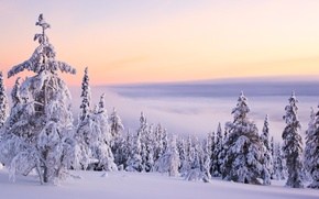 Wallpaper winter, clouds, snow, mountains, nature, silence, tree, frost, day, white, fluffy