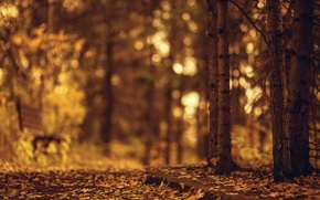 Picture autumn, leaves, trees, bench, nature, background, tree, widescreen, Wallpaper, blur, wallpaper, leaves, widescreen, background, autumn, ...