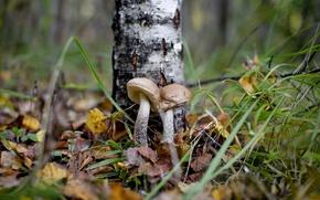 Picture mushrooms, autumn, forest, boletus