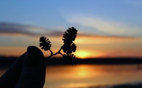 Picture the sky, sunset, nature, silhouette, real photo