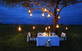 Picture lamp, romance, the evening, Savannah, Africa, champagne, romantic, dinner, bush, dinner