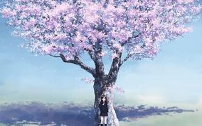 Wallpaper girl, cherry, anime, spring, Sakura