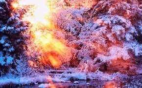 Picture winter, water, the sun, light, snow, trees, nature