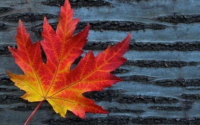Picture leaves, macro, red, background, tree, widescreen, Wallpaper, leaf, wallpaper, form, leaf, widescreen, background, full screen, …